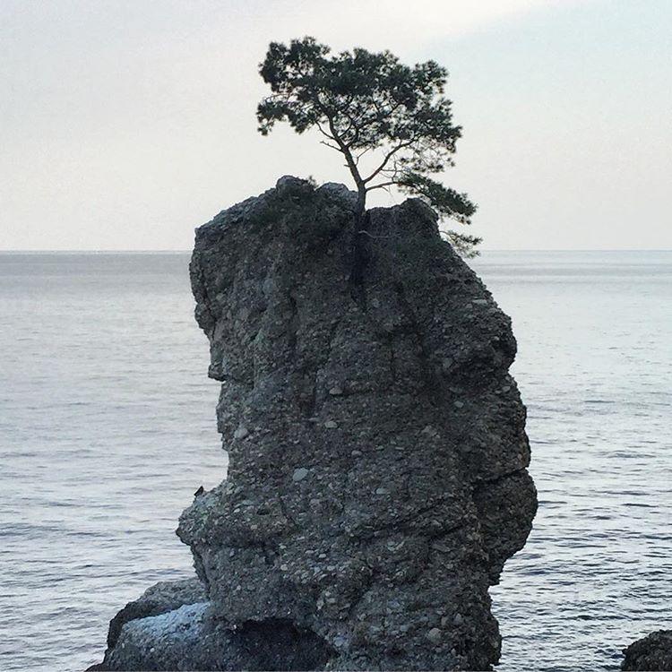 Life force.  #italy #liguria #trees #treeoflife  (at Santa Margherita Ligure)