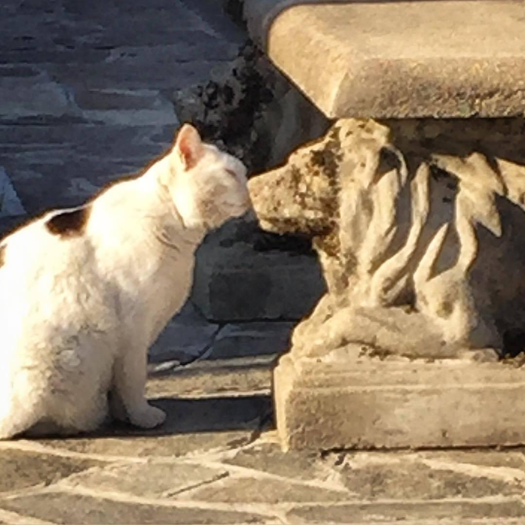 ❤  #italy #piedmont #langhe #cat  (at Piazza di Dogliani.)