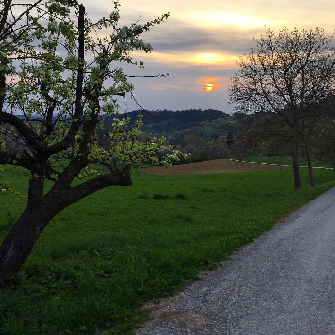 Evening constitutional; on the hills' steep ascent, the sound of my heavy breath overtakes the noise in my head.  #italy #piedmont #langhe #spring #nature  (at Bossolasco)