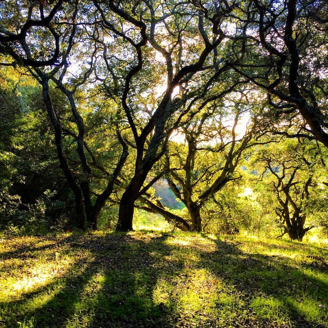 Staving off winter.  #california #napa #nature  (at Napa, California)