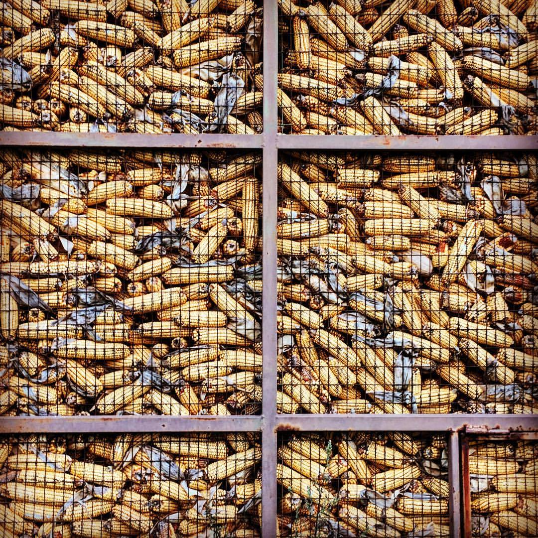 Animal feed stocked for winter.  #italy #piemonte #cornfordays  (at Bossolasco)