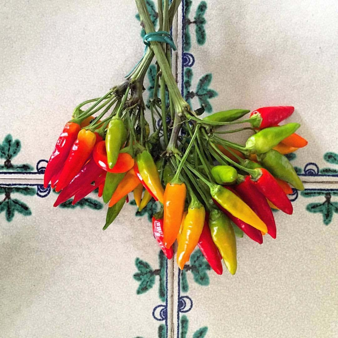 Readying Sunday lunch.  #italy #piemonte #hotpeppers  (at Bossolasco)