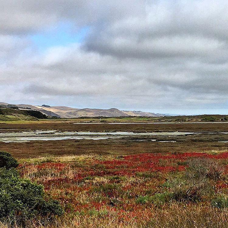 Marshes.  #california #wildliferefuge #marshland  (at Bodega Bay, California)