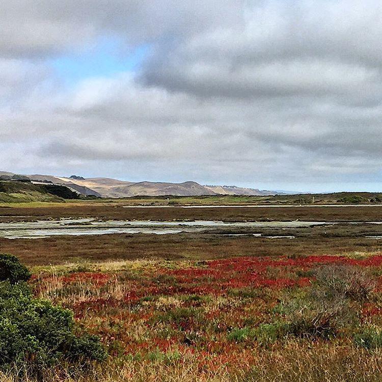 Marshes.  #california #marshland #wildliferefuge  (at Bodega Bay, California)