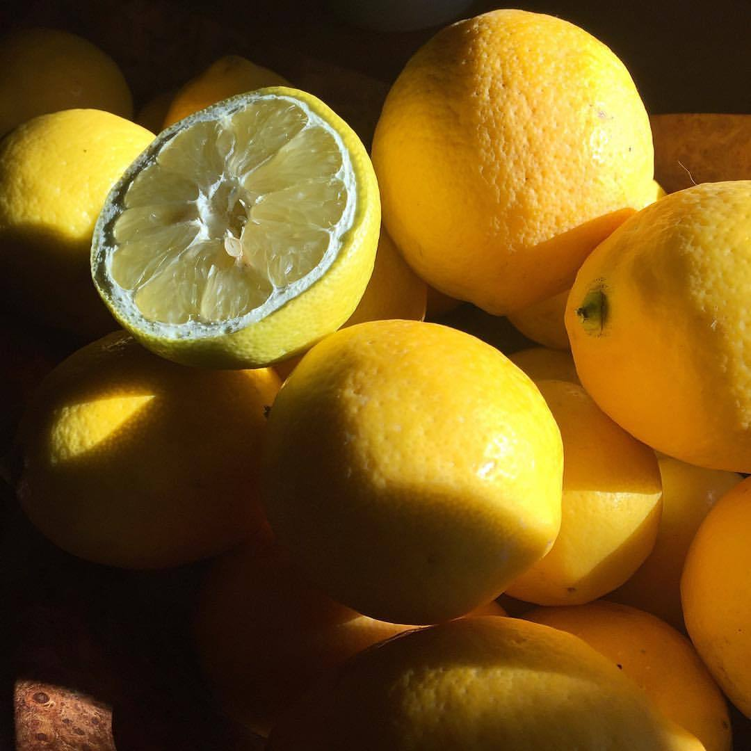 Citrus.  #california #meyerlemon