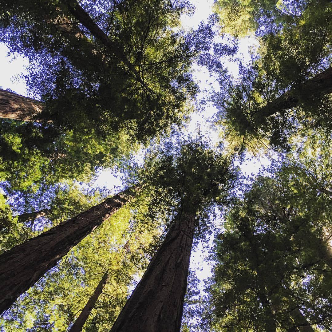 Nature protected.  #california #redwoods #avenueofthegiants #summerroadtrip  (at Humboldt Redwoods State Park)