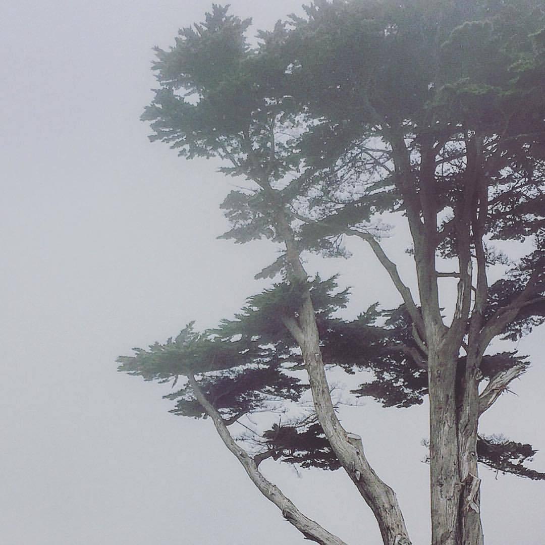 Foggy Northern California coast.  #california #mendocino #foggy  (at Abalone Point)