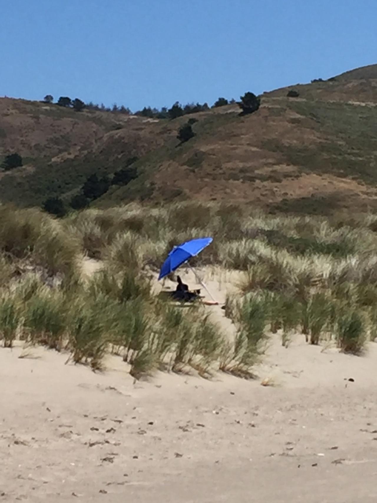Hidden in the dunes.  Point Reyes National Seashore.