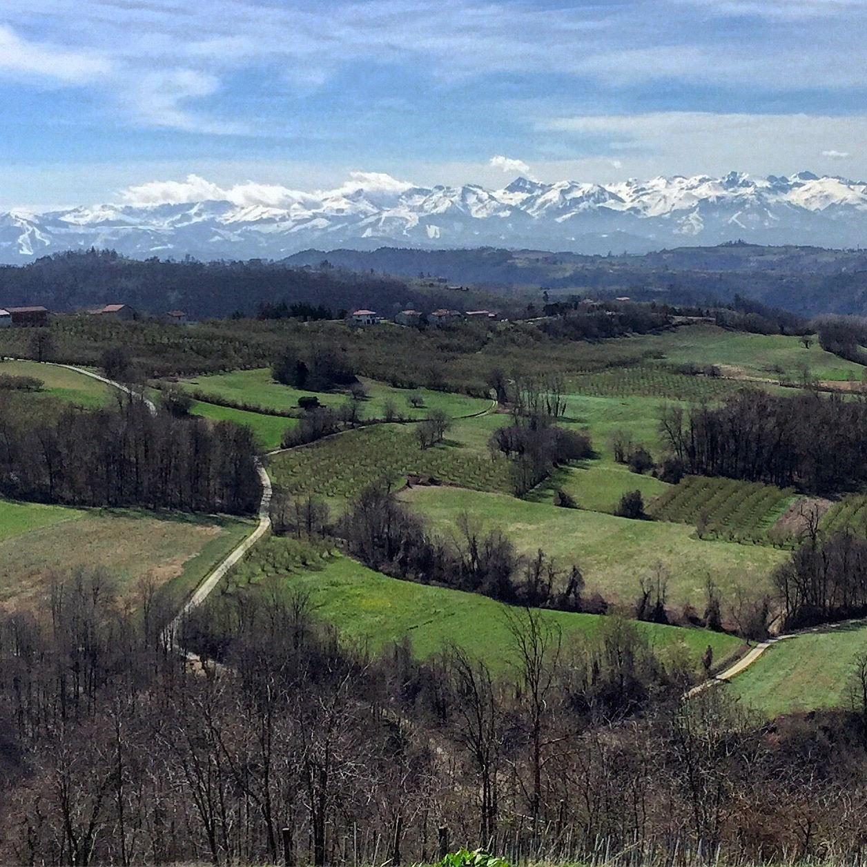 Miles and miles of hazelnut orchards and Nebbiolo vineyards stretching to the snow-capped Alps.  Piedmont, Italy