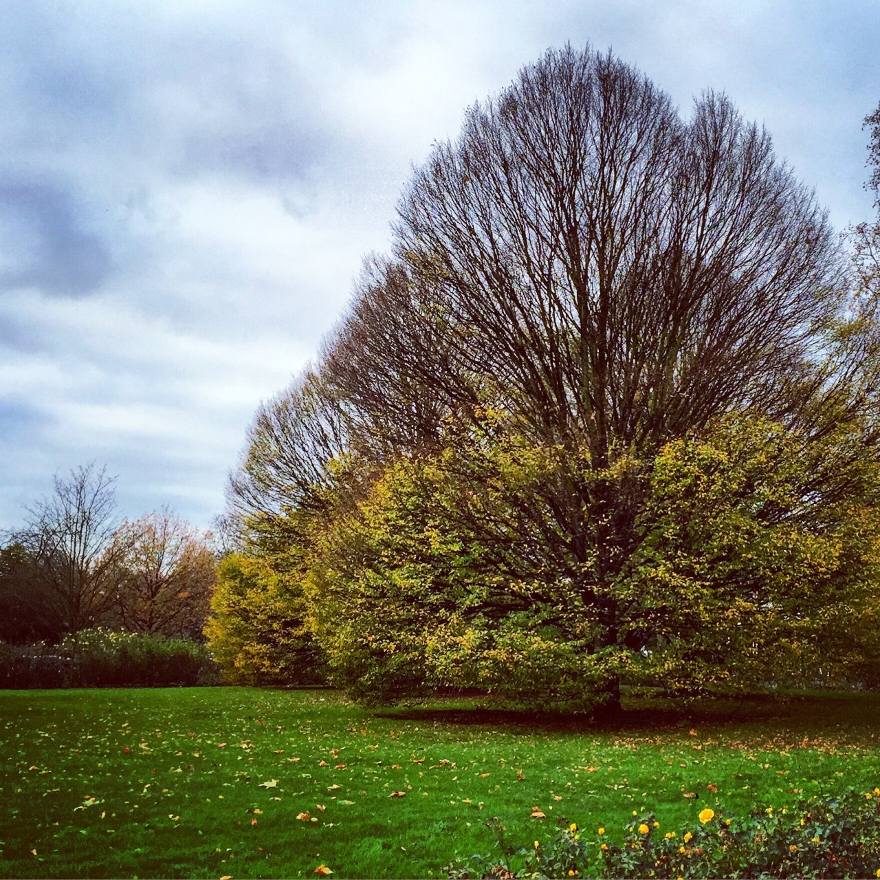 Deciduous, top down.  Regent's Park, London.