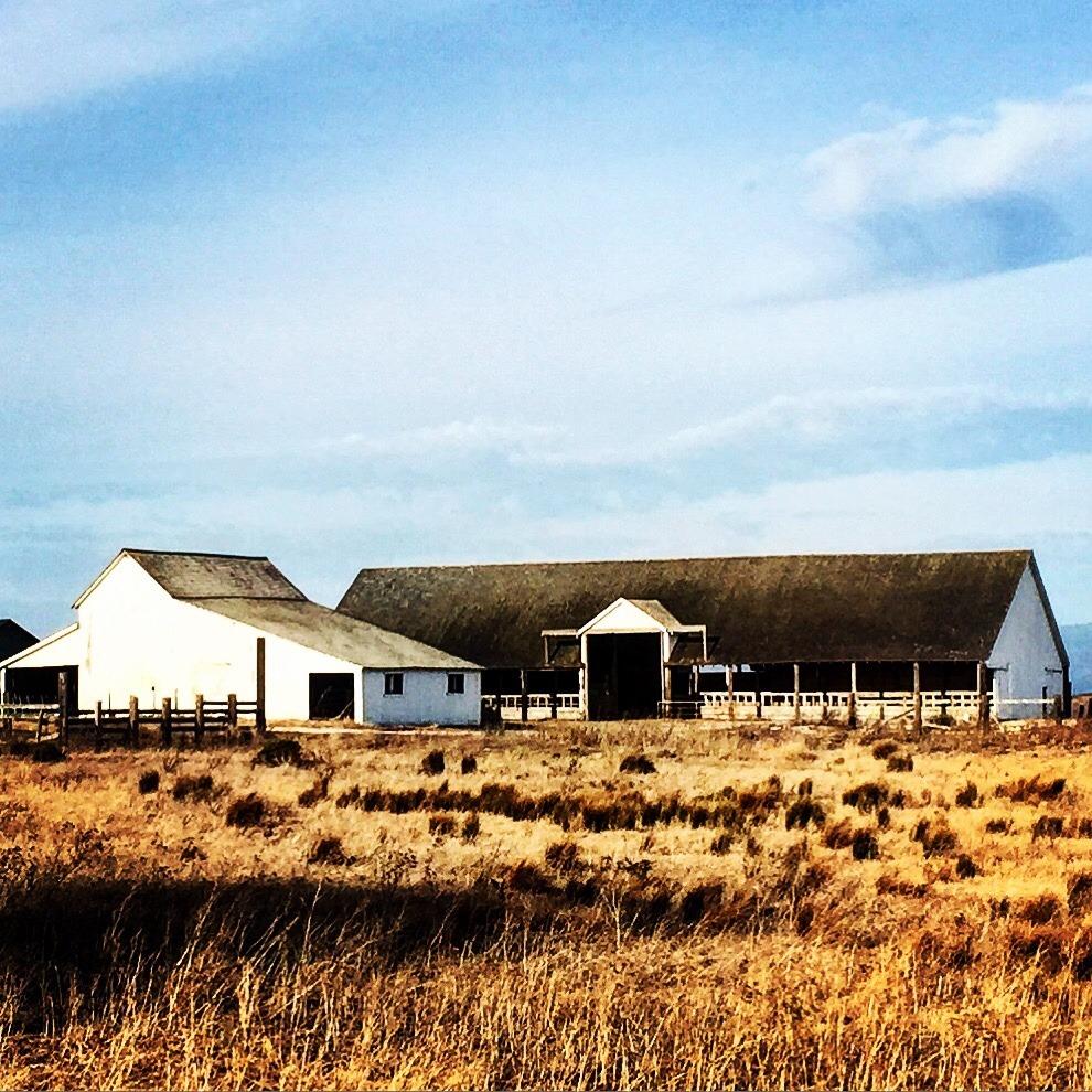 Cattle ranch.  Point Reyes National Seashore, California.  #california #pointreyes