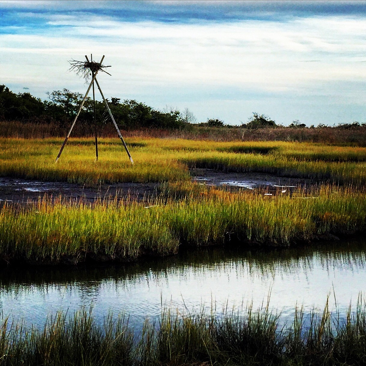 A heron's nest tucked into Gooseneck Creek marsh in Newport, Rhode Island.  #newport #rhodeisland #newportwineandfoodfestival