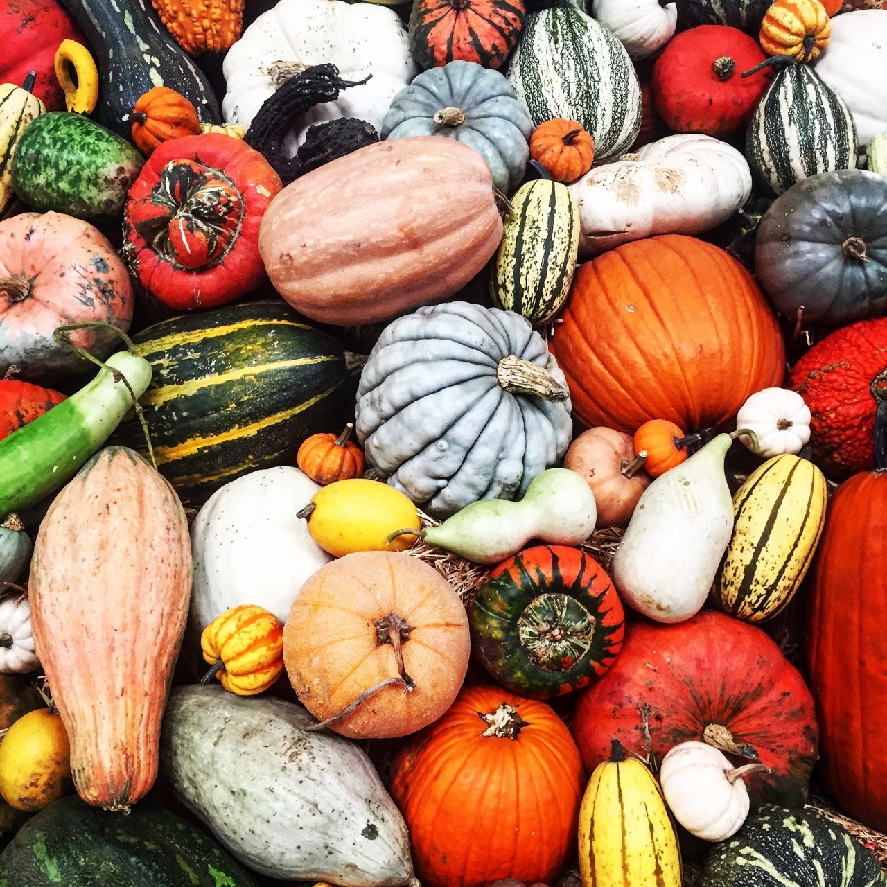 Heirloom Fair.  Sonoma County, California #california #heirloomseeds #sonoma #harvestfestival