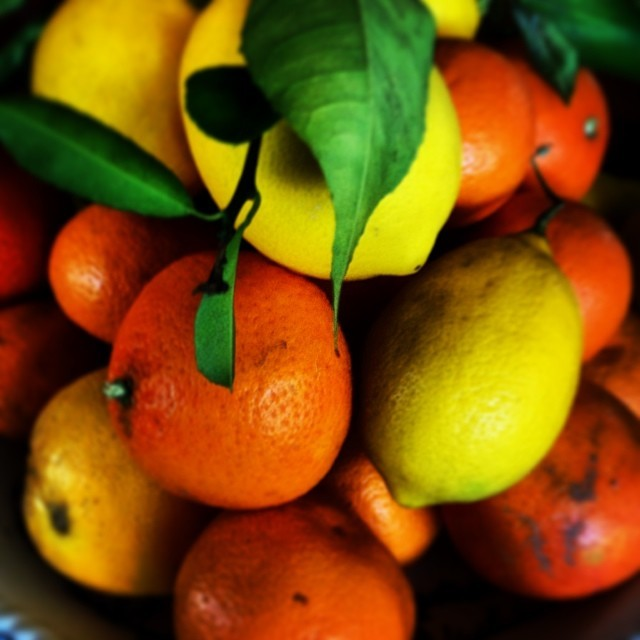 Winter citrus. (at at home in Napa)