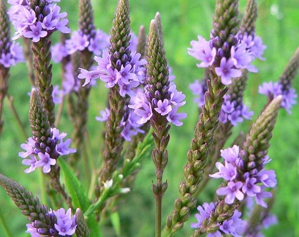 herbal medicine workshops eugene oregon