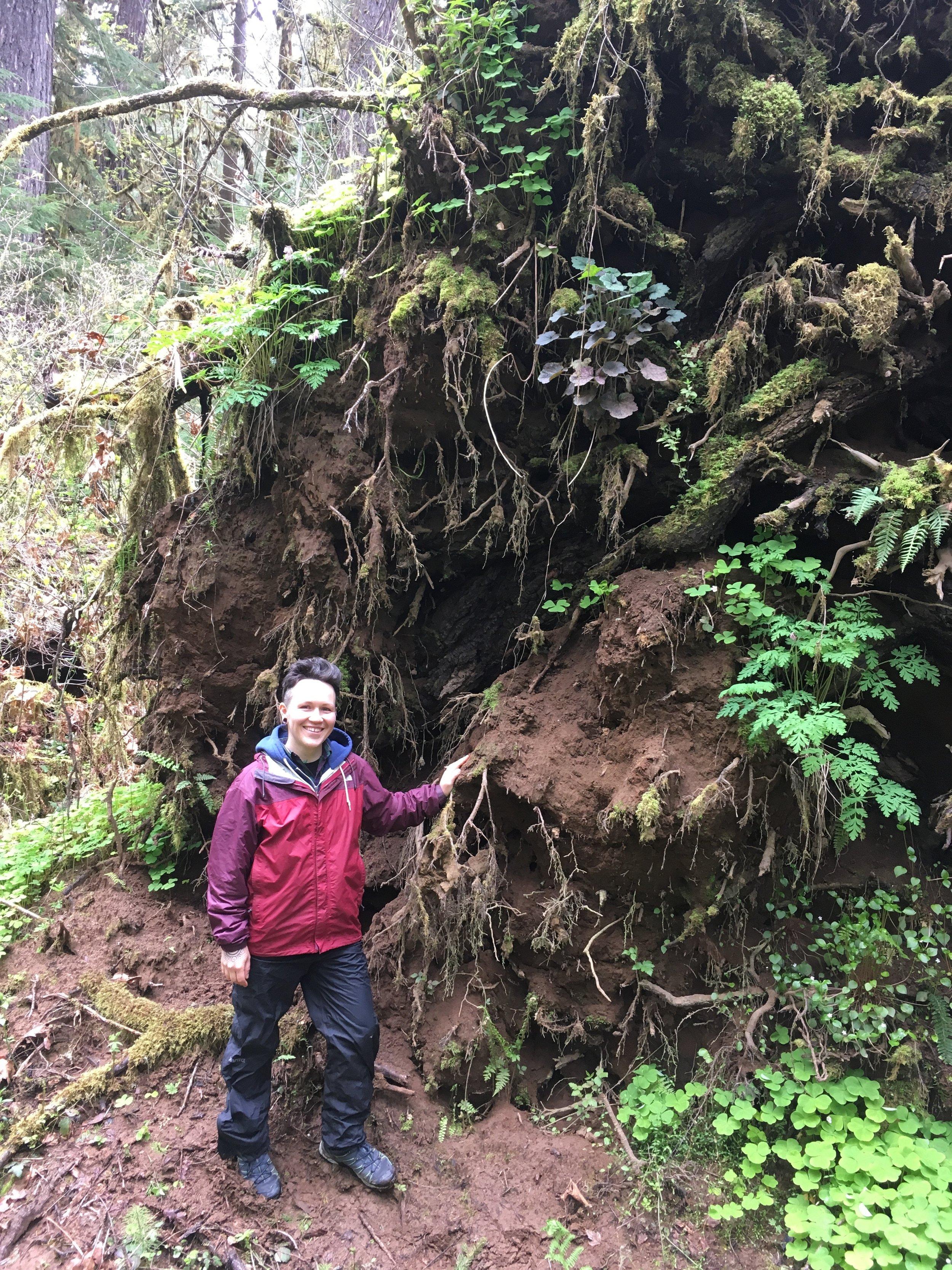 wildcrafting herbs forage oregon herbalism