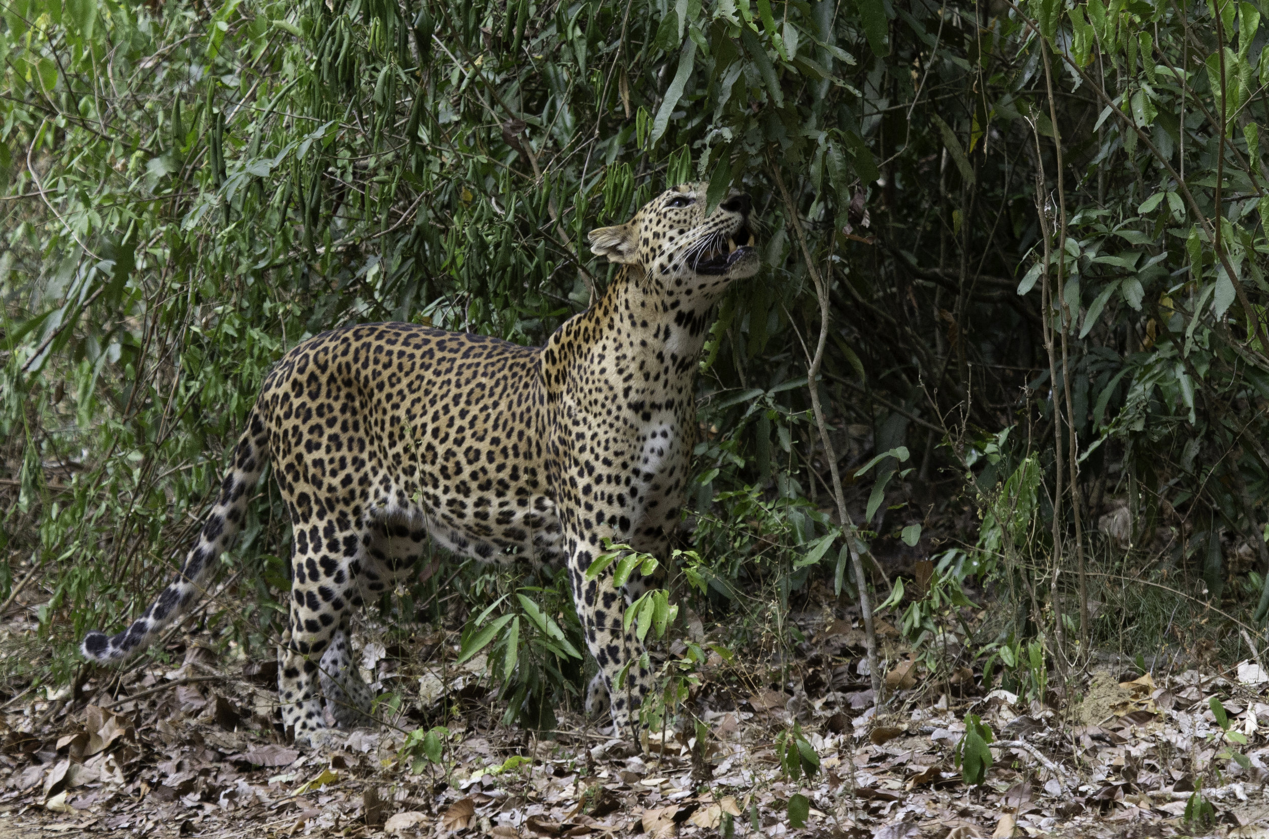 Leopard territory.jpg