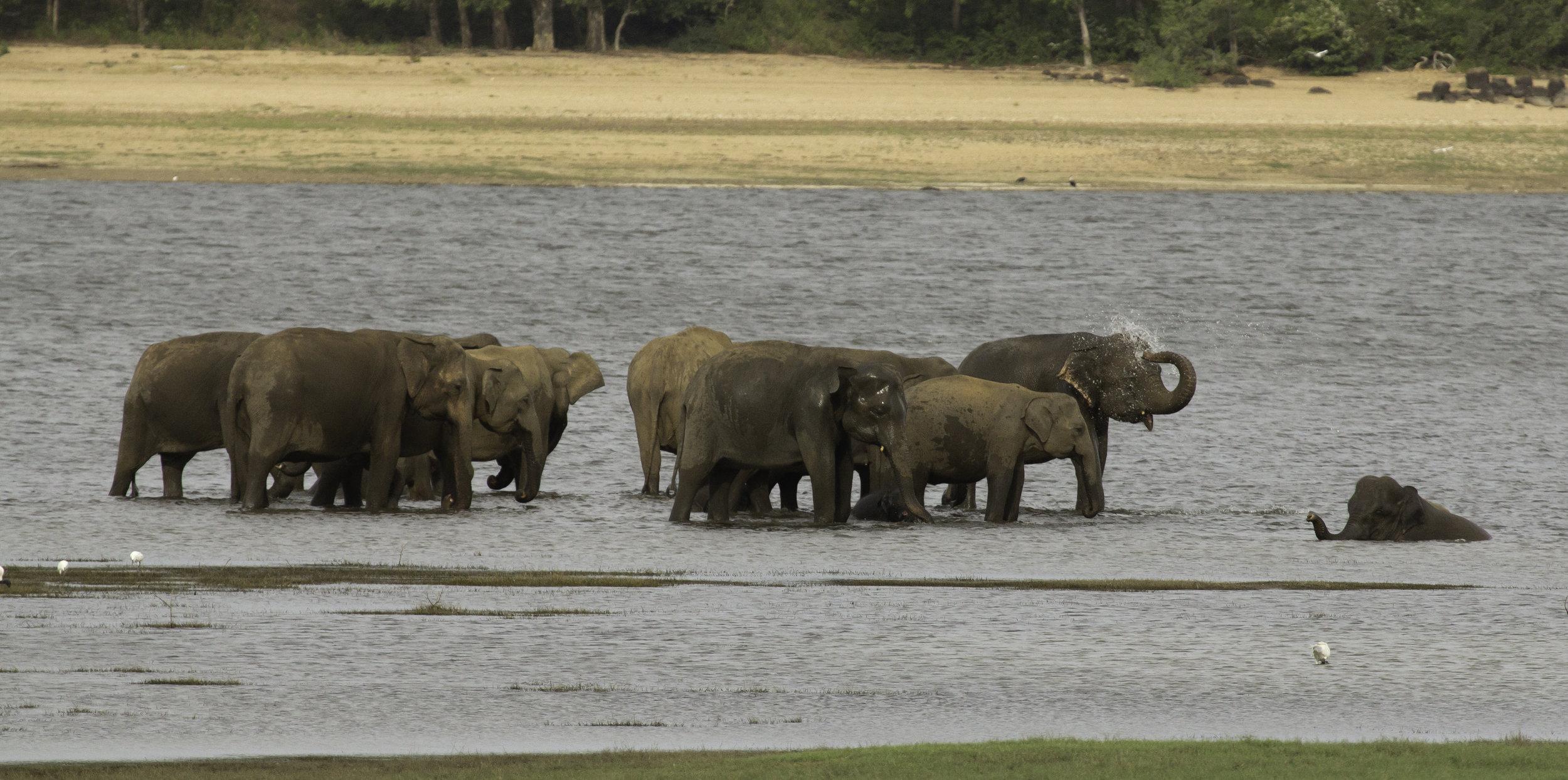 Elephant Water fun.jpg