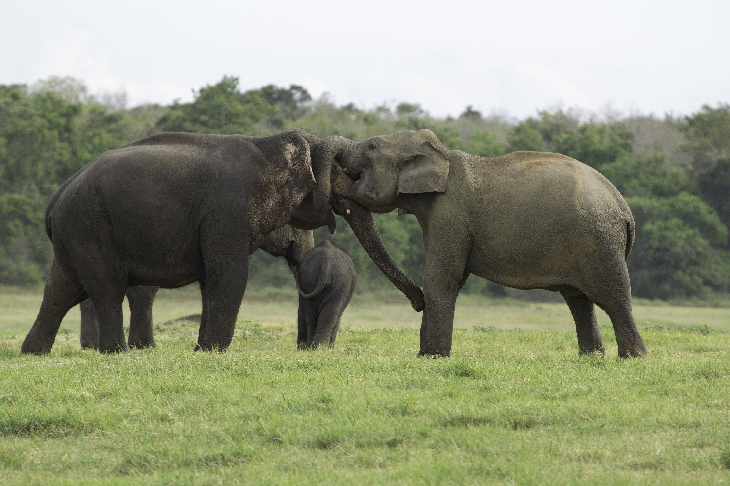 Elephant Exchange.jpg