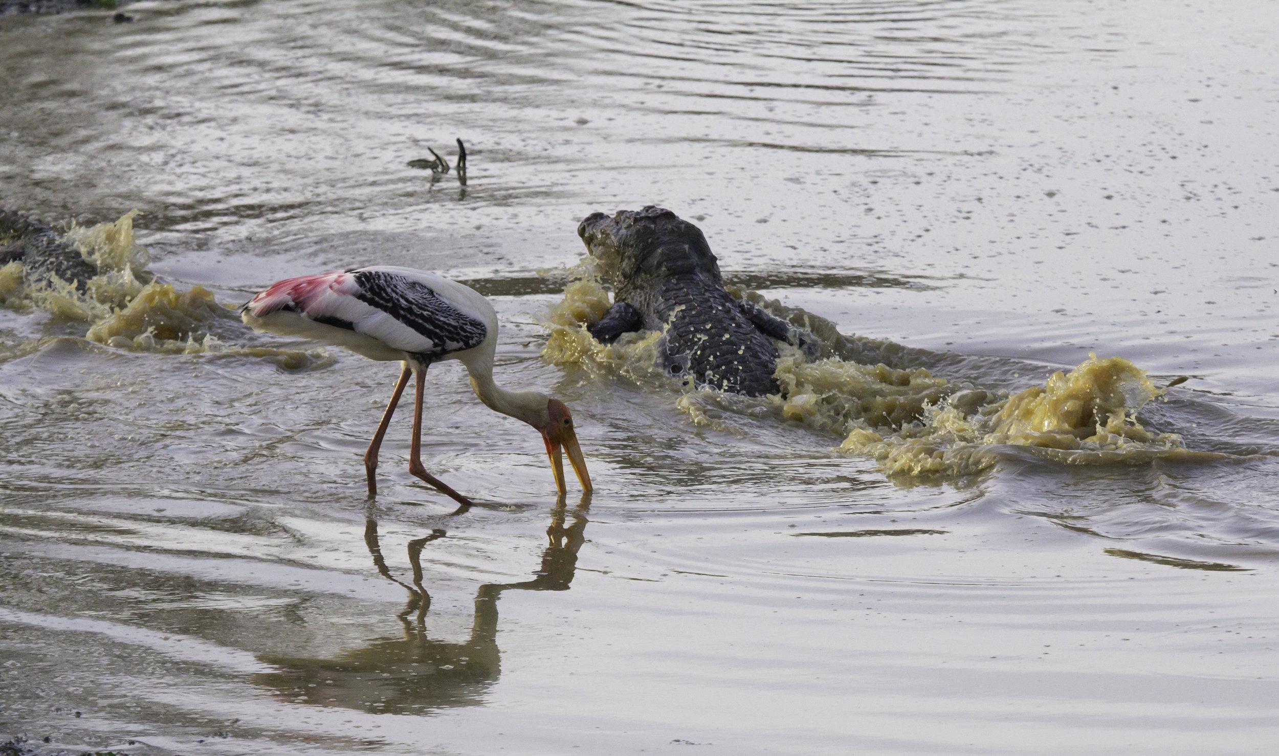 Stork and Croc.jpg