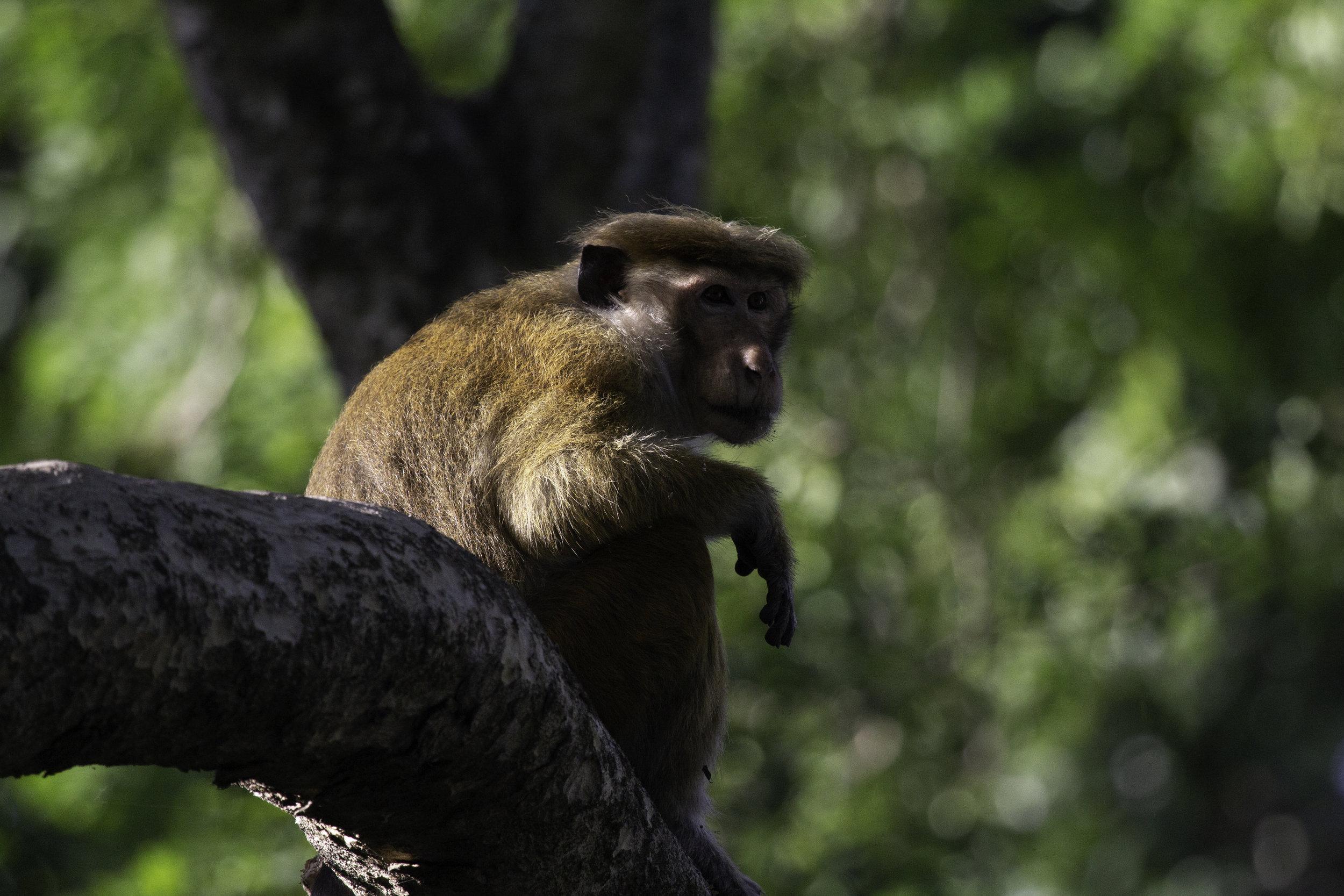 Relaxed Monkey.jpg