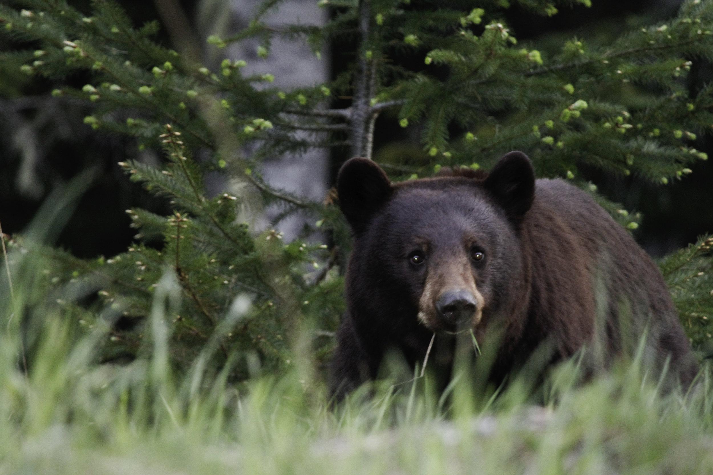 Best Bear.jpg