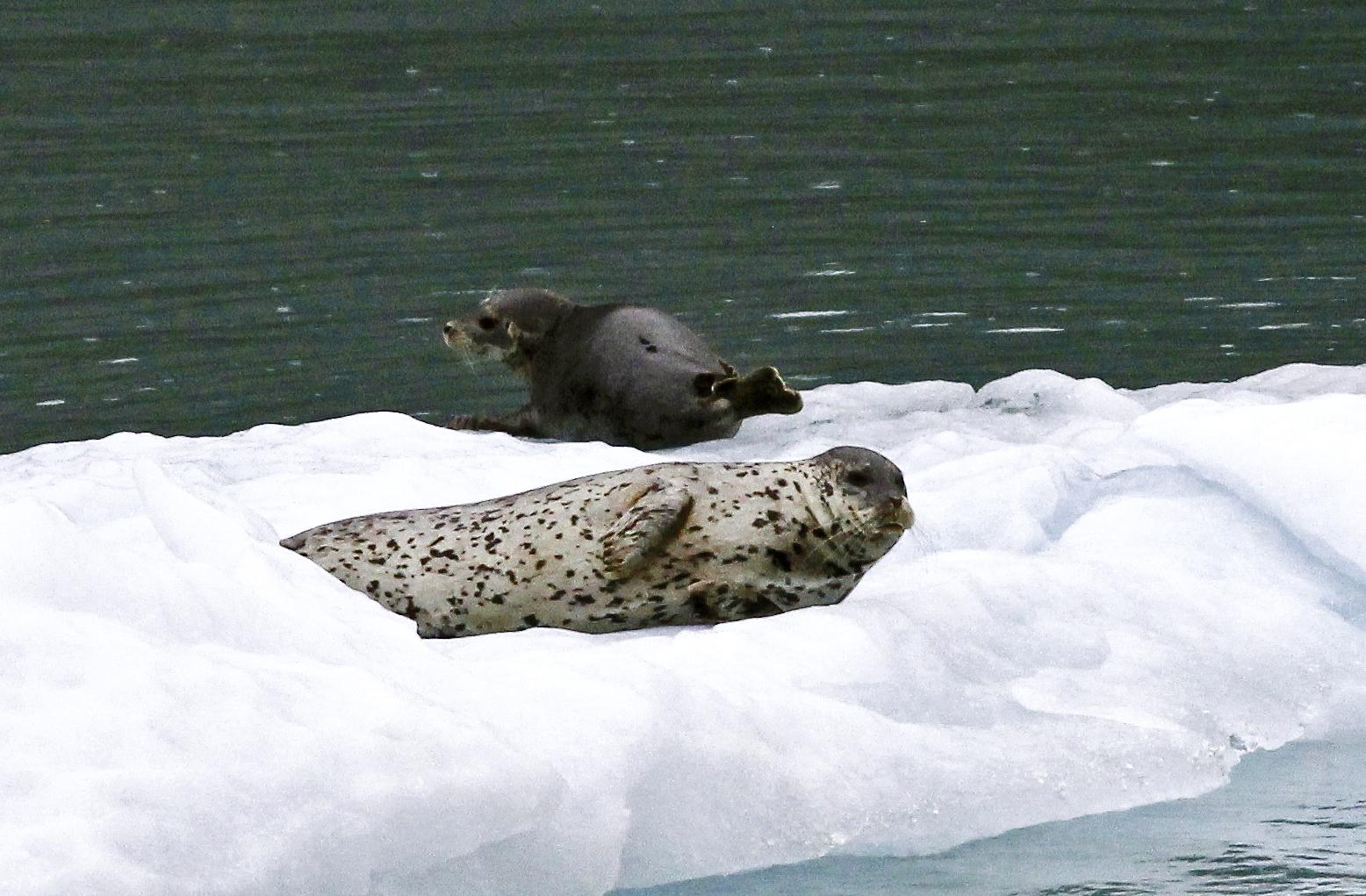 SealPairFloat.jpg