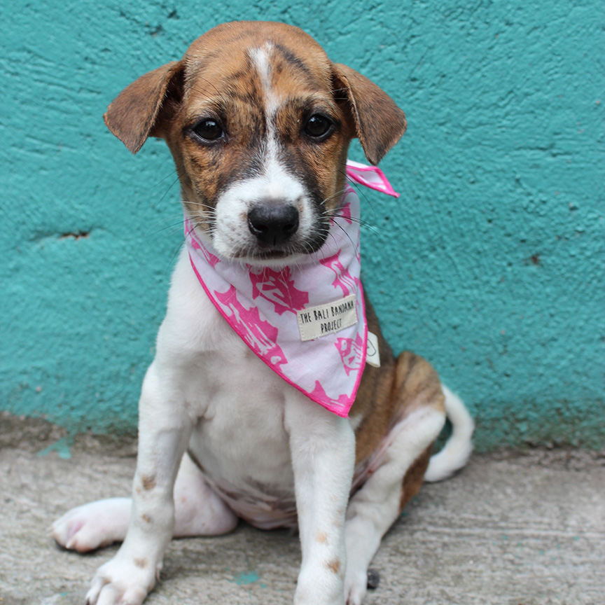 The Bandana Love Project - A Bandana on a Dog is a symbol of LOVE..