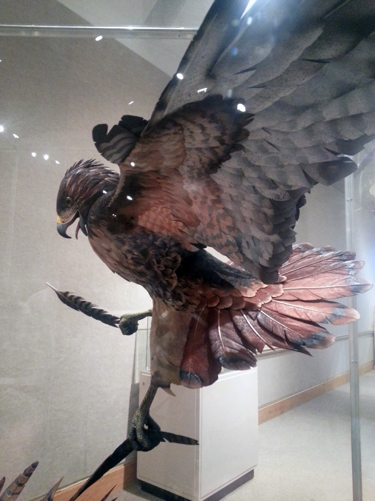 Hawk & Pheasant