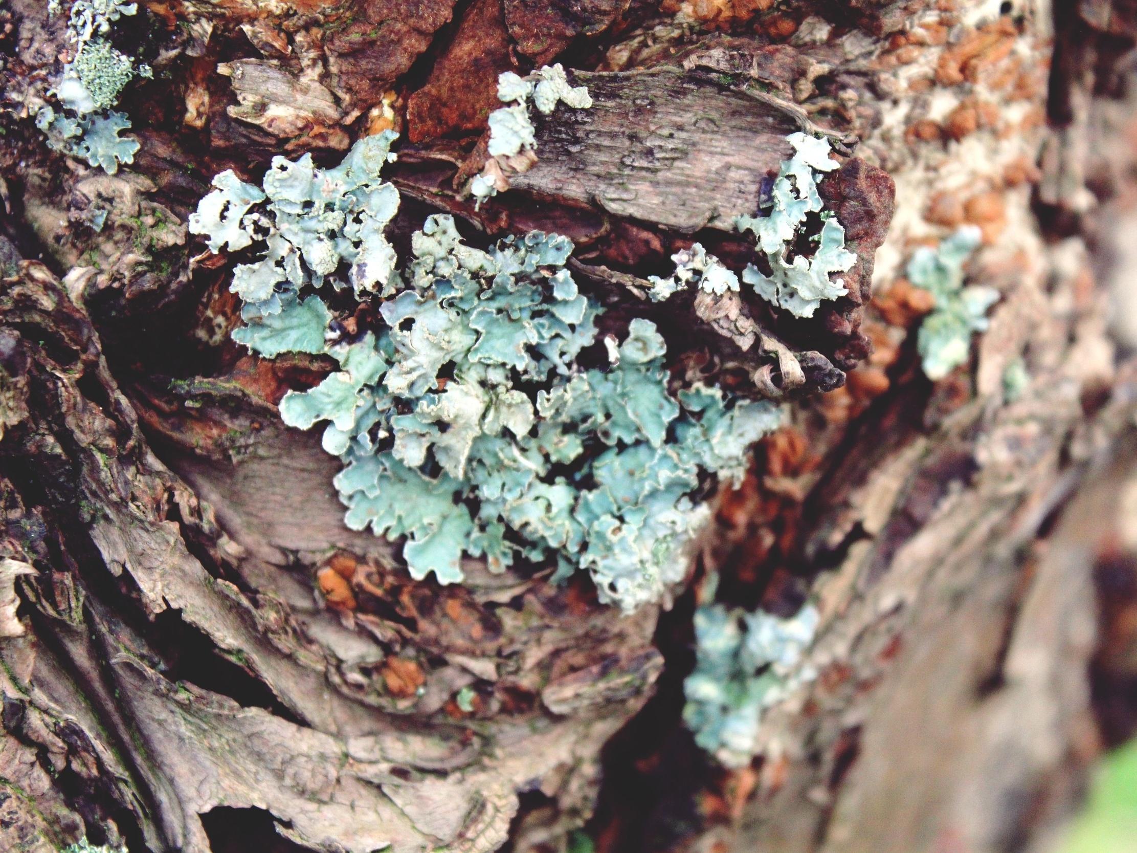 lichen-1043425.jpg