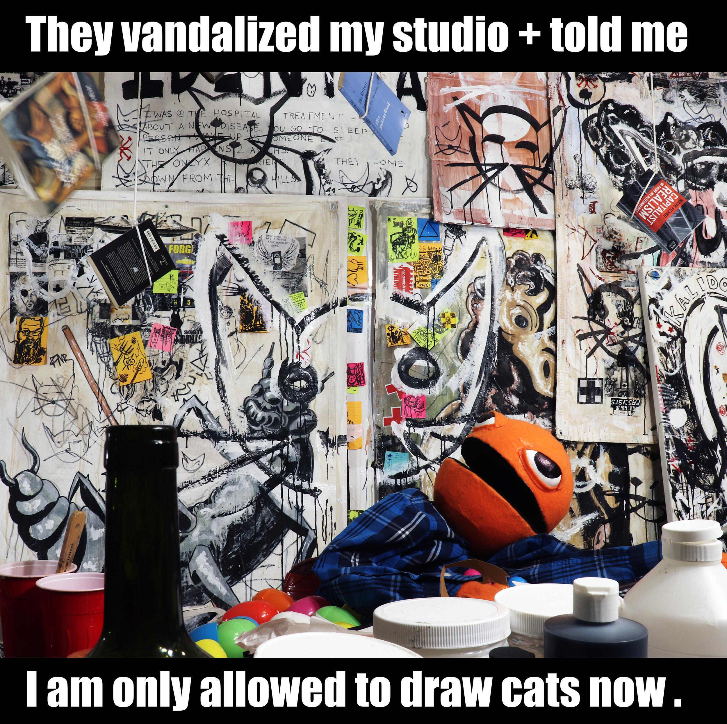 https://www.anachs.com/blog-1/onlycats