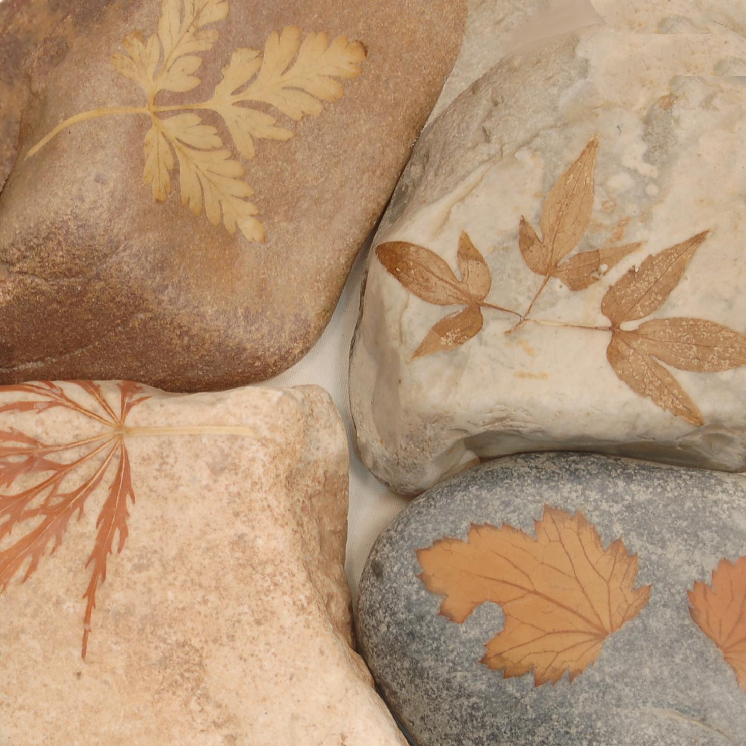 Leaves & Petals -