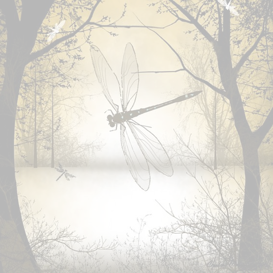 Dragons & Butterflies -