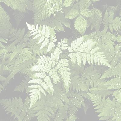 Leaves, Trees & Petals -