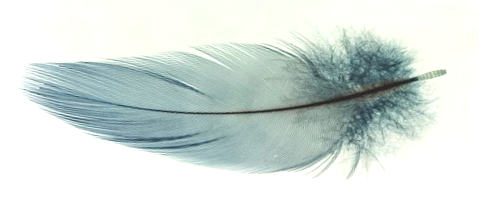 Feather horizontal lighter TRANS .png