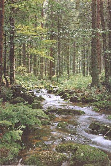 River 2 .JPG