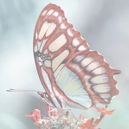 Dragons &Butterflies -