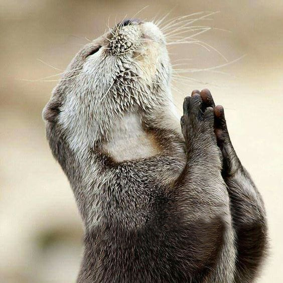 Thank you otter .png