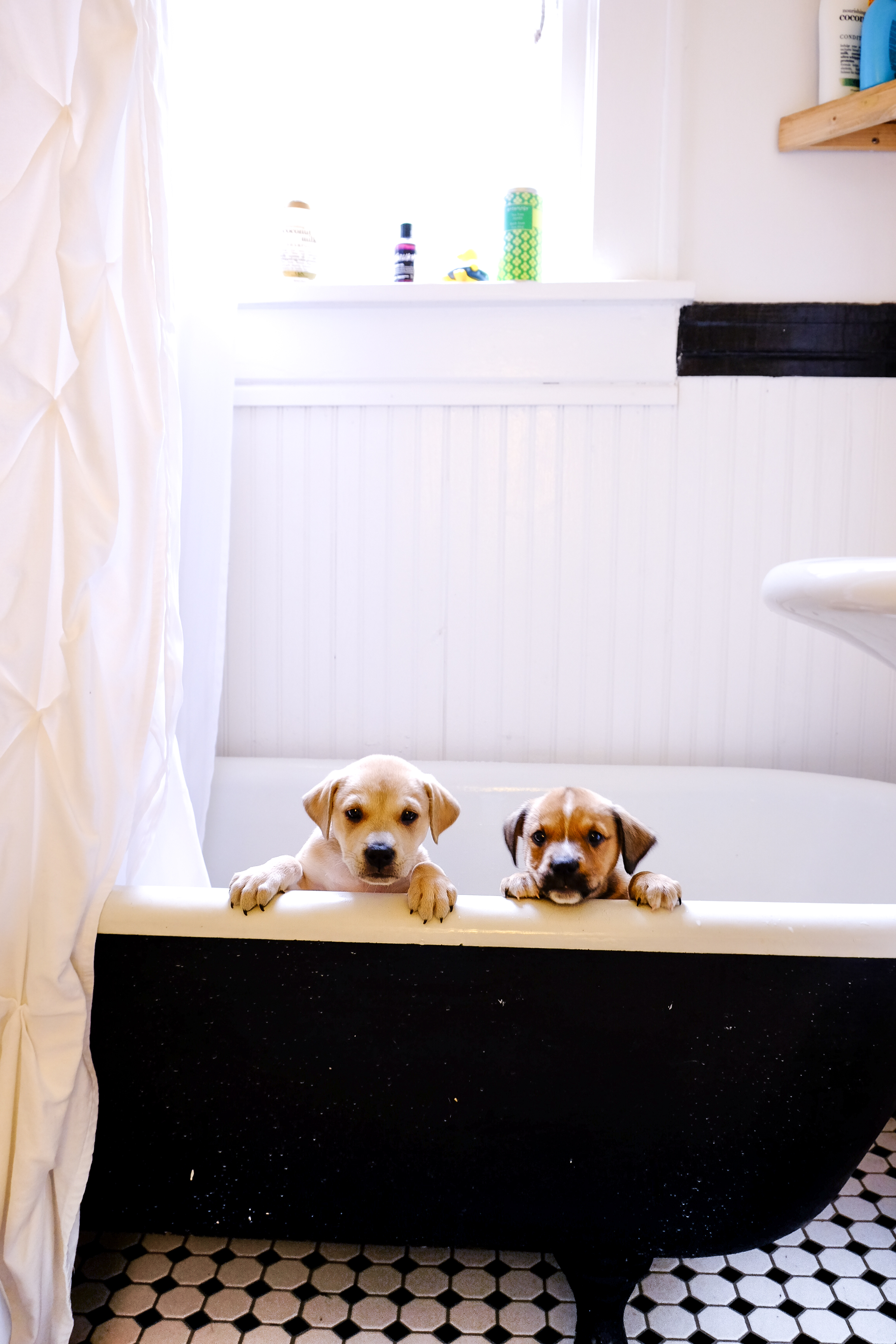puppyinbath (1 of 1).jpg