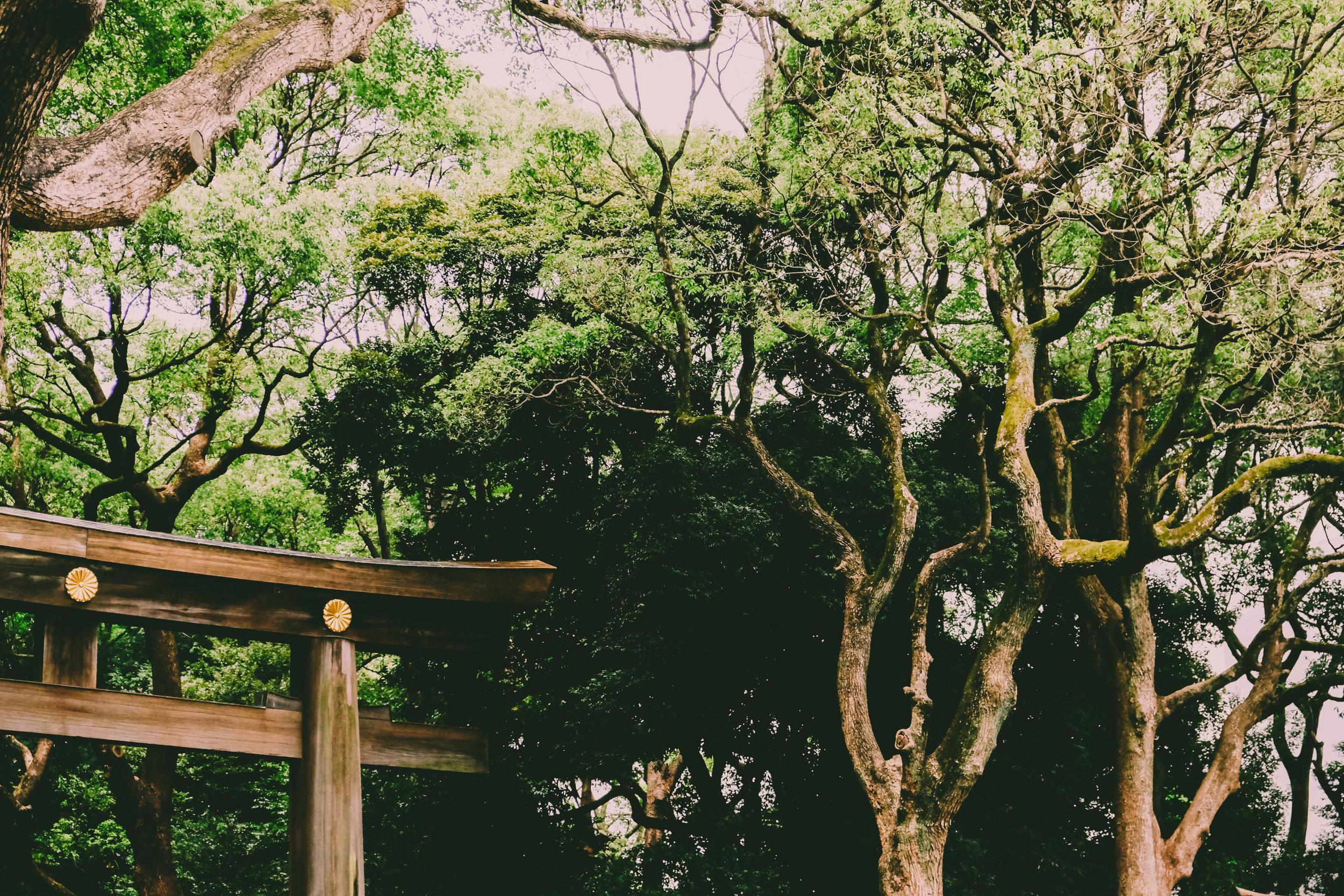 8.27.19_tokyo-5.jpg