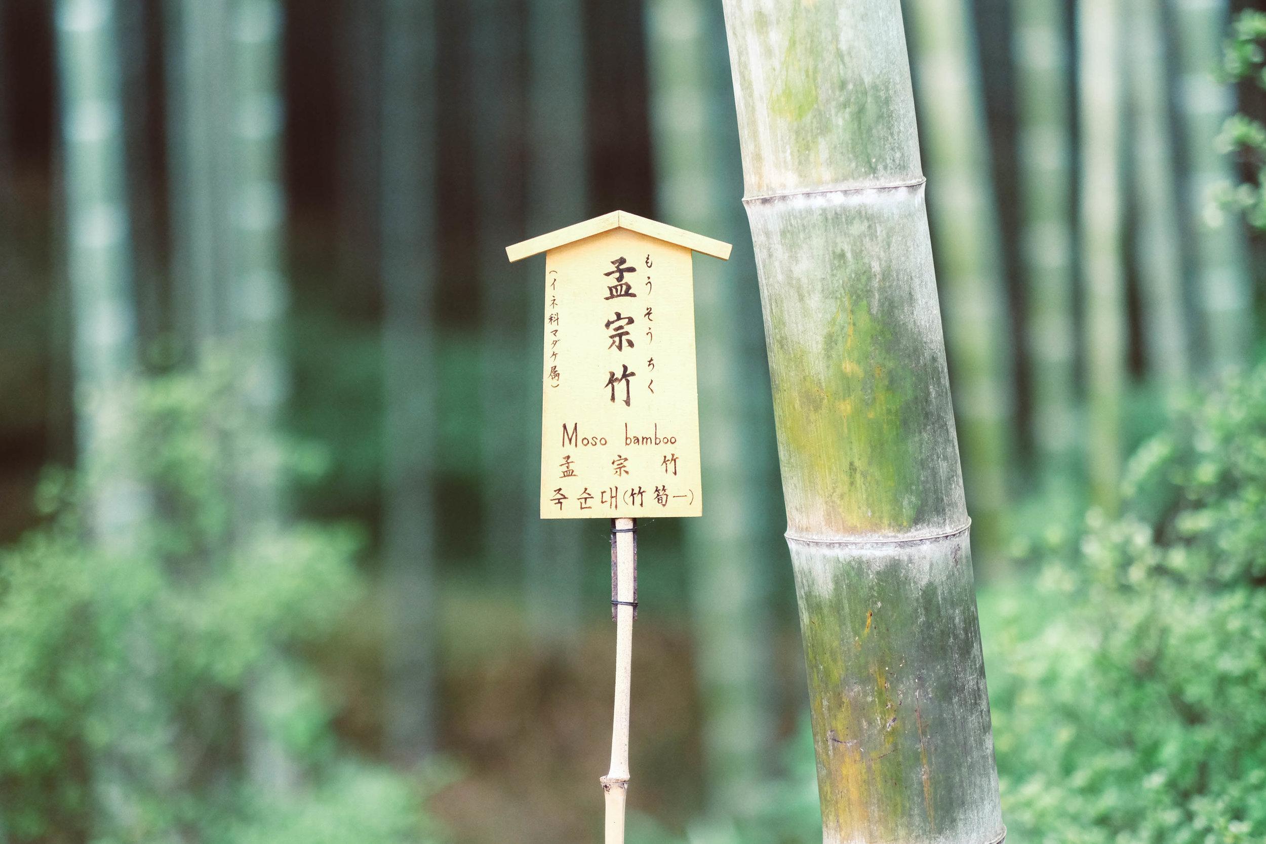 8.31.19_kyoto-78.jpg
