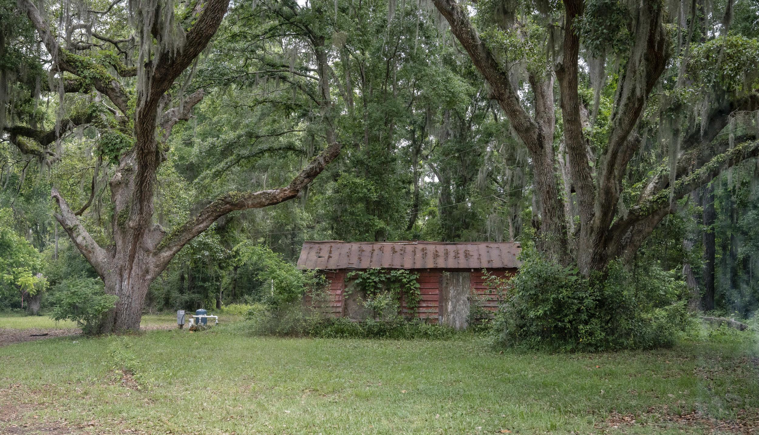 Abandoned Gullah home nestled in the trees.
