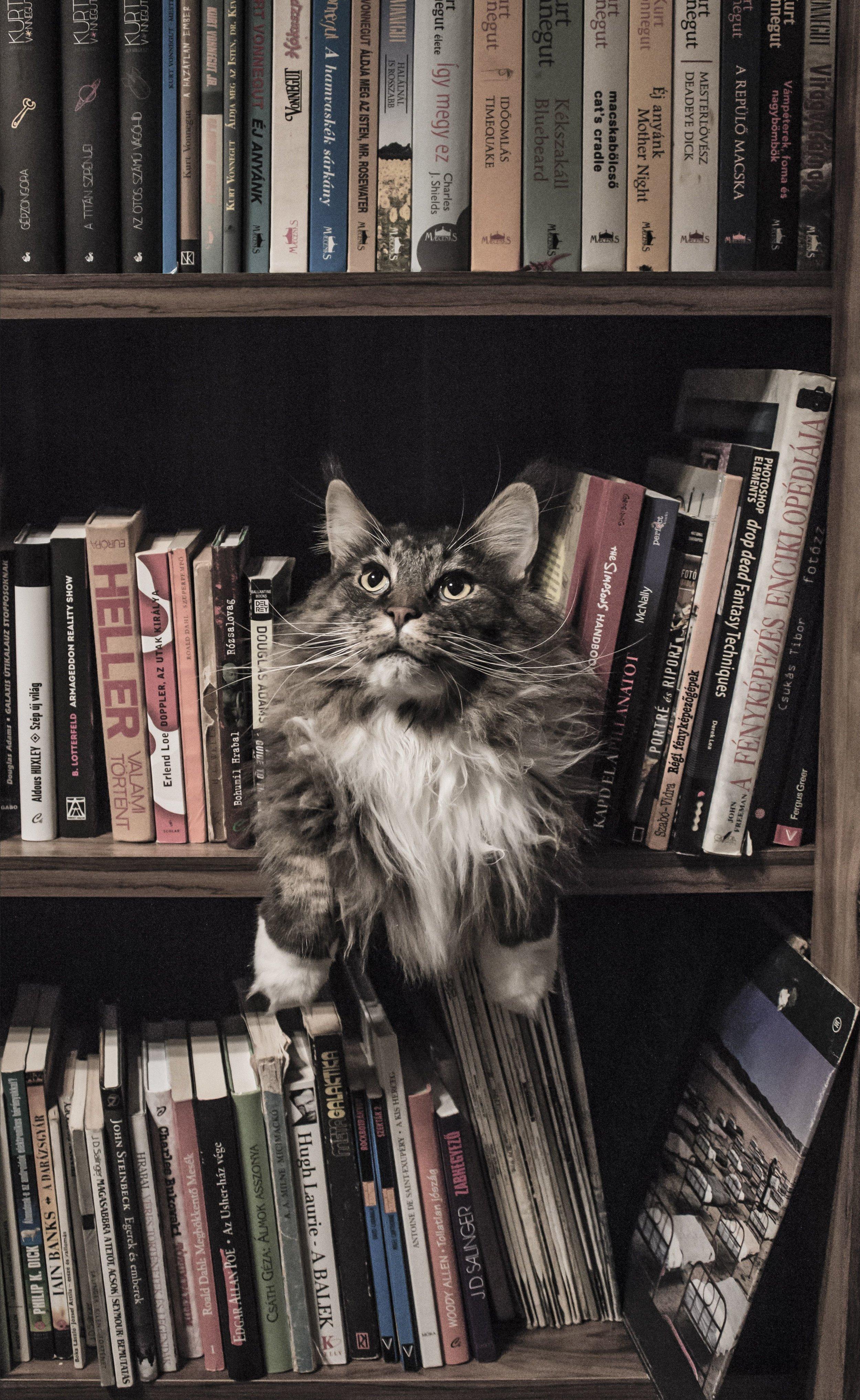 catandbooks-compressor.jpg
