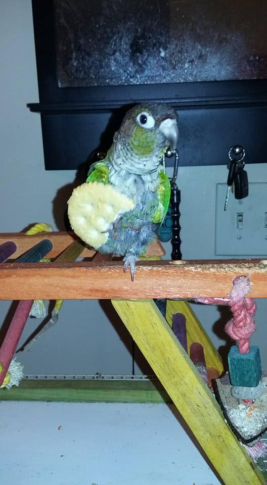 """""""Pete the Parrot"""""""