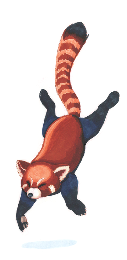 RedpandaCopic.png