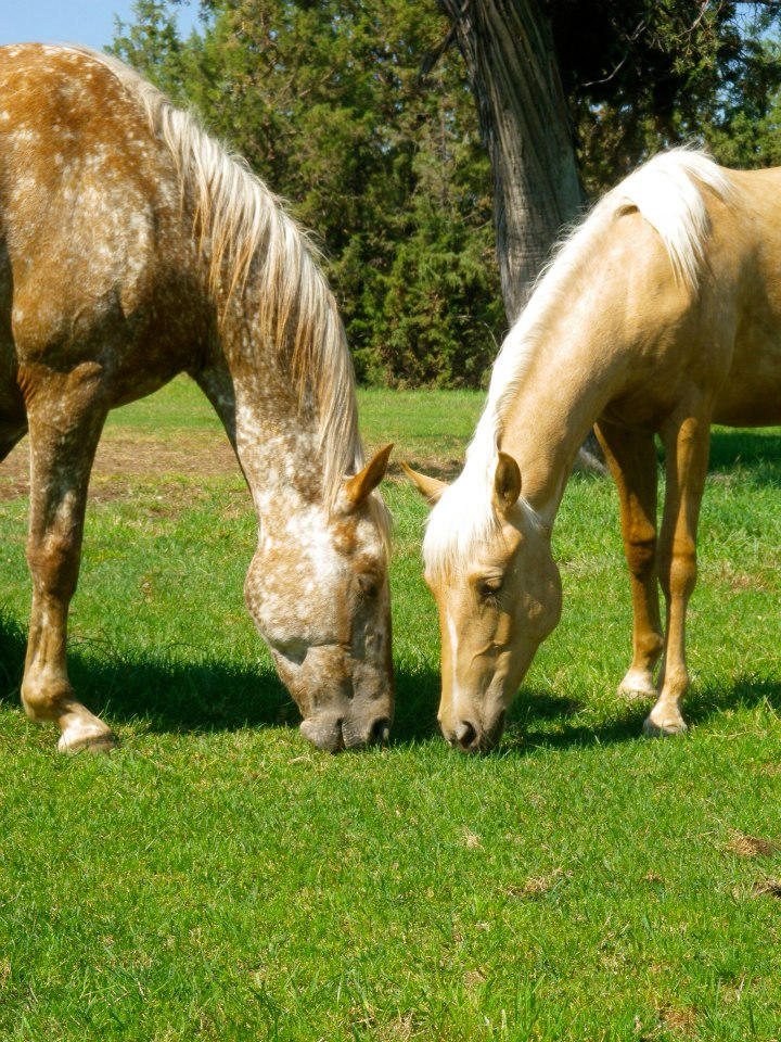 horses-eating-by-each-other.jpg