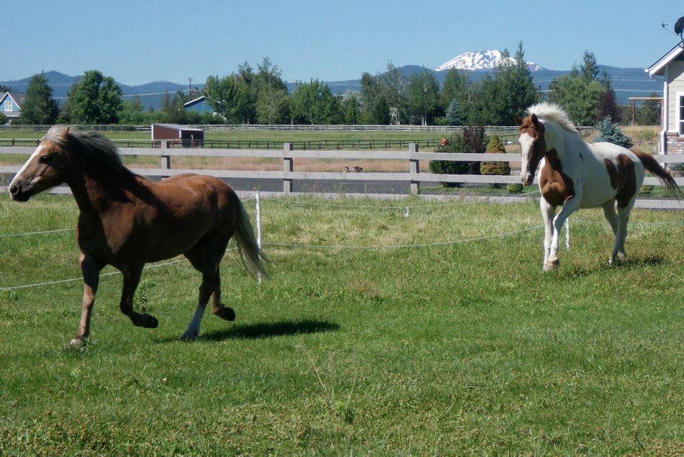 horses-chasing-each-other.jpg
