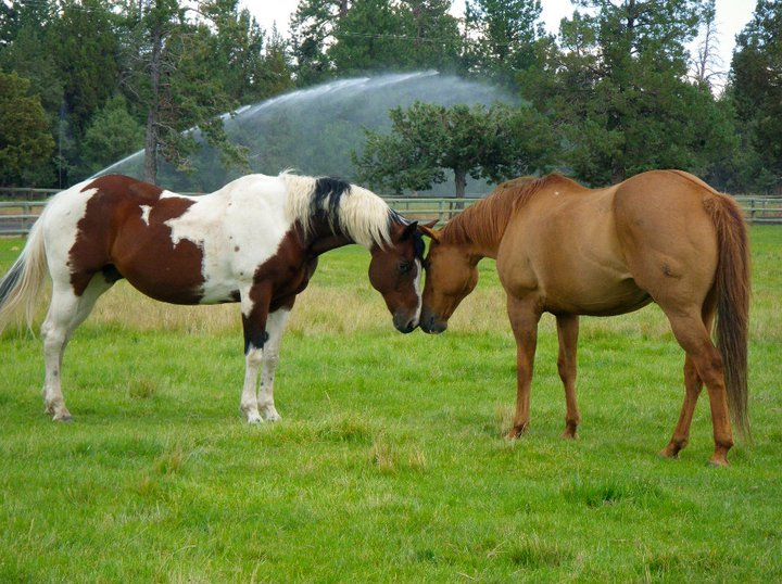 horses-touching-faces.jpg