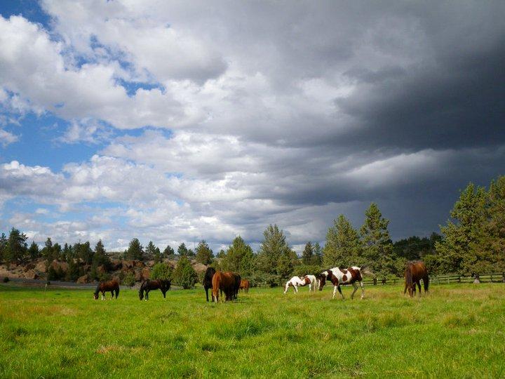 horses-in-field-with-dark-cloud.jpg