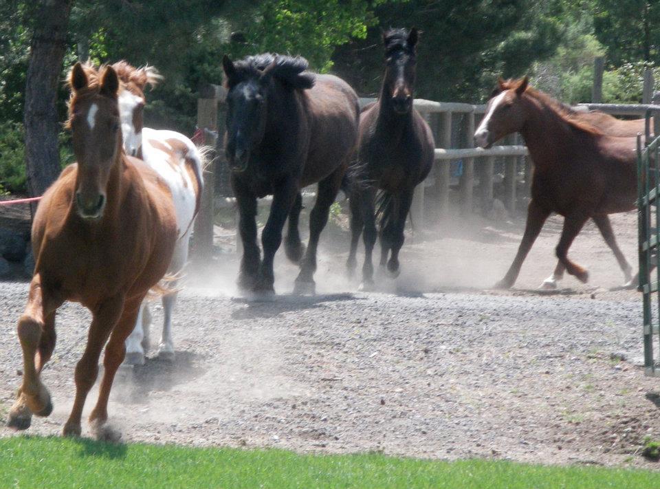 horses-running-1.jpg